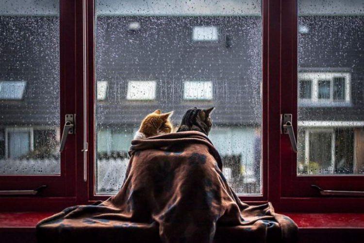 О психологических границах. Тренируемся на кошках